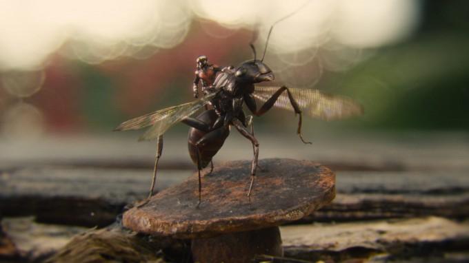앤트맨이 작아질 때는 개미 위에 올라탈 만큼 질량도 함께 줄어든다. 영화 속 상상이지만 과학에 억지로 끼워 맞추려면 질량이 줄어든 만큼 방출하는 에너지를 안전하게 가두는 기능이 필요하다. - 월트 디즈니 컴퍼니 코리아 제공